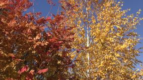 Autumn paints the southern Urals stock footage