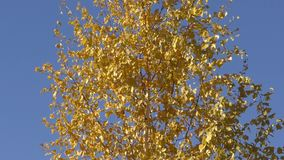 Autumn paints the southern Urals. Nature of southern Urals in the autumn stock footage