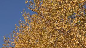 Autumn paints the southern Urals. Nature of southern Urals in the autumn stock video