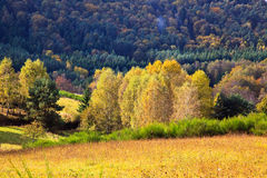 Autumn in the Palatinate Forest Royalty Free Stock Image