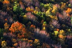 Autumn palette Stock Photography