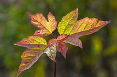 Autumn palette. Royalty Free Stock Images