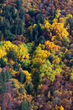 Autumn palette Royalty Free Stock Photography