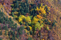 Autumn palette Stock Image