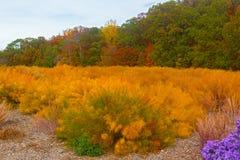 Autumn palette. US National Arboretum in the Fall, Washington DC Stock Photos