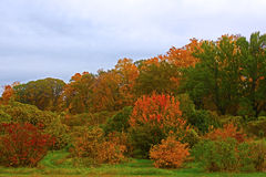 Autumn palette. US National Arboretum in the Fall, Washington DC Royalty Free Stock Image