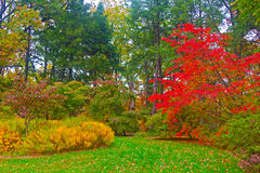 Autumn palette. US National Arboretum in the Fall, Washington DC Stock Images