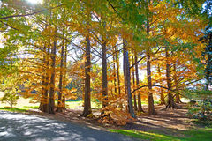 Autumn palette. US National Arboretum in the Fall, Washington DC Stock Image
