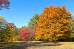 Autumn palette. US National Arboretum in the Fall, Washington DC Royalty Free Stock Photo