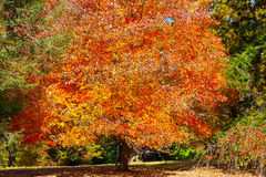 Autumn palette. US National Arboretum in the Fall, Washington DC Stock Photography
