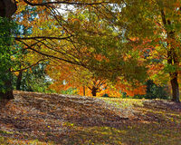 Autumn palette. US National Arboretum in the Fall, Washington DC Royalty Free Stock Photography
