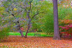 Autumn palette. US National Arboretum in the Fall, Washington DC. A lonely bench adds to the charm and beauty of the colorful forest Royalty Free Stock Image