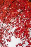 Autumn palette from yellow to red.  stock photo