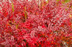 Autumn palette from yellow to red.  stock photos