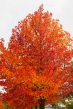 Autumn palette from yellow to red.  royalty free stock photos