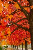 Autumn palette from yellow to red.  royalty free stock photo
