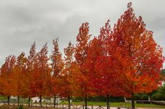 Autumn palette from yellow to red.  royalty free stock photography