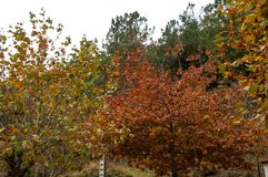 Autumn palette from yellow to red.  stock images