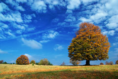 Autumn Panorama. Single tree over the beautiful cloudscape Royalty Free Stock Photos