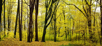 Autumn panorama Royalty Free Stock Photos