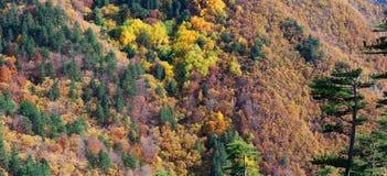 Autumn Panorama Fotografia Stock Libera da Diritti