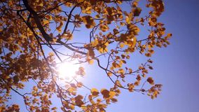 Autumn panorama in forest at field with a sun stock video footage