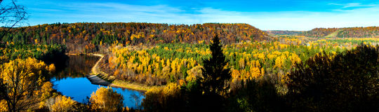 Autumn panorama. Panorama  of golden forest and river flowing through it Royalty Free Stock Photos