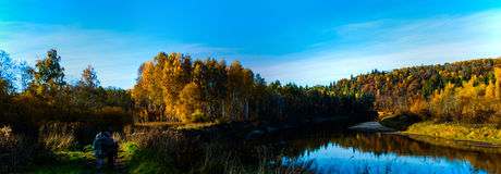 Autumn panorama. Panorama of a golden forest and river flowing through it Stock Image