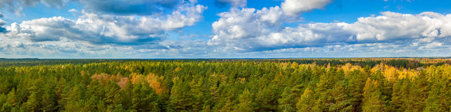 Autumn panorama of green forest Stock Images