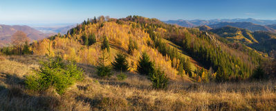 Autumn panorama mountain forest Stock Photos