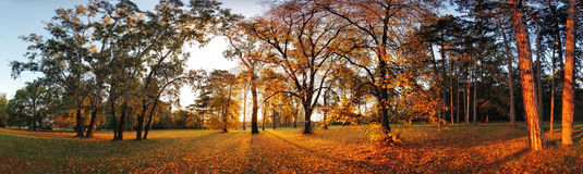 Autumn panorama in park Royalty Free Stock Photo