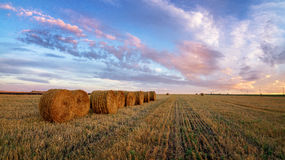 Autumn panorama rural field with cut grass at sunset Royalty Free Stock Photos