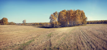 Autumn panorama with wide mowed field Stock Photo