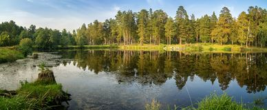 Free Autumn Panorama With A Pond And Pines On The Shore, Russia Ural Stock Image - 125171871