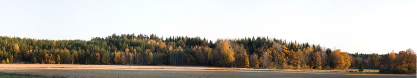 Autumn Panoramic. Panoramic image of an autumn forest line with some farm land and a soft warm light shinning on to the forest Stock Images