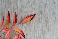 Autumn. Paper on wood background Stock Photography