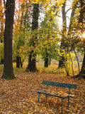 Autumn in the parc. Autumn bench surrounded by leaves and trees in the golden light of sunset Royalty Free Stock Images