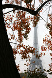 Autumn in Paris. With Eiffel Tower at the background Royalty Free Stock Photos