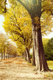 Autumn in Paris, France. Royalty Free Stock Image