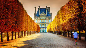 Autumn in Paris. A man jogging toward the Louvre Museum in the fall, Paris , France