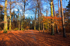 Autumn park. Vibrant image of autumn park at sunset Stock Images