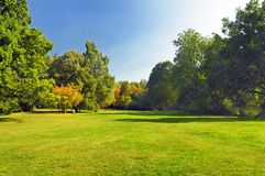Autumn park. Trees with green and yellow foliage in a park royalty free stock photos