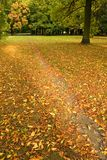 Autumn Park. Path covered with yellow autumn leaves. Autumn in park Stock Photos