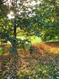 Autumn at the park Stock Photos