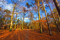 Autumn park. Vibrant image of autumn park at sunset Stock Photography