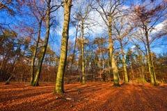 Autumn park. Vibrant image of autumn park at sunset Royalty Free Stock Photo