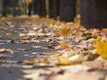 Autumn in park. Yellow leafs on a trail in park stock photography