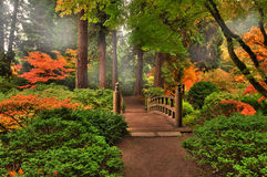 Autumn in a park royalty free stock photos