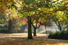 Autumn in the park. Late sunlight atmosphere duringautumn in a park Royalty Free Stock Image