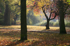 Autumn in the park. Late sunlight atmosphere duringautumn in a park Royalty Free Stock Photography